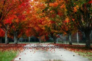 trees-233466_1280